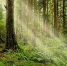 homepage-portfolio-forest